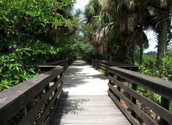 Discover Miami's Natural Side